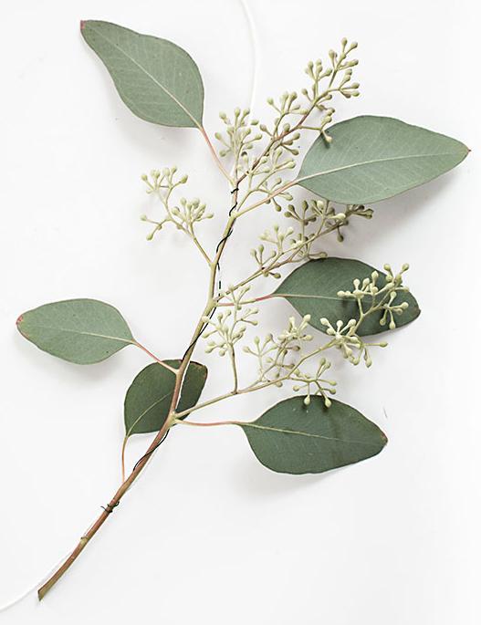 guirnalda con hojas 2 http www manualidadesplus com
