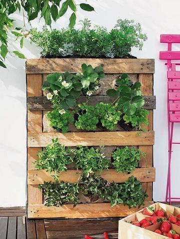 jardin vertical 2 http www manualidadesplus com