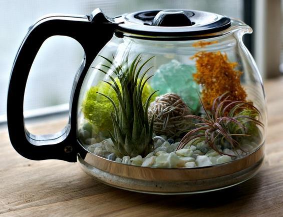 Manualidades para la cocina terrario con cafetera reciclada for Objetos decoracion cocina