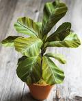 Planta con Papel Crepe paso a paso